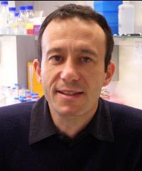 Principal Investigator - Lino Ferreira